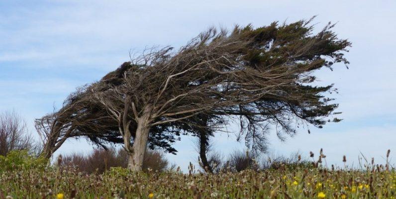 krummer Baum Individualität